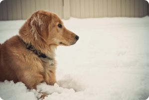 Snow Day II by BahrcodePhotography