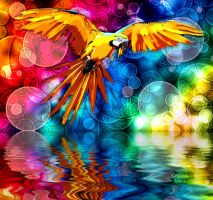 Parrot on Bokeh by ChiaraLily9