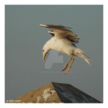 seagull 02 by cazper
