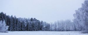 Winter panorama by wellgraphic