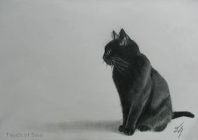 Black Cat. by Aglyra