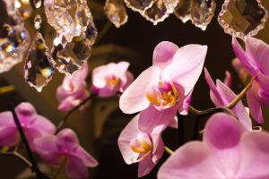 Flowery Crystals by FunTroon