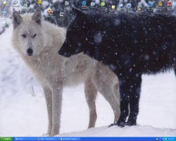Black and White wolves desktop by TheHurtWolf