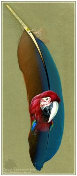 Greenwing Macaw by Nambroth