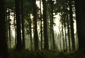 Inhospitable forest by Ennebell