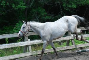 Appaloosa 97 by Spotstock