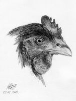 Chicken by grini