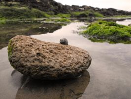 lonely snail by Julesjustjules