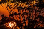 Gumtree Sunset by jbrum