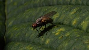 Fly on a leaf by Antza2