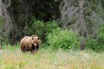 Tagish Grizzly by FrozenFella