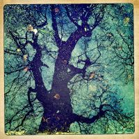 just another tree by crh