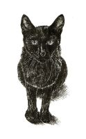 The Cat by mmuch