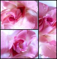 Rose - Pink by Tienna