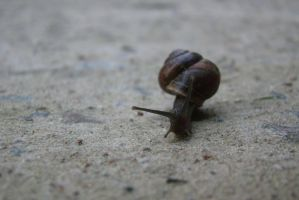 Little snail 8 by Panopticon-Stock