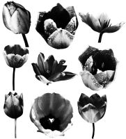 Tulip Brushes 02 by Thy-Darkest-Hour
