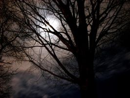 Moon behind tree by Keith-D