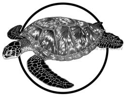 Turtle by Skirill