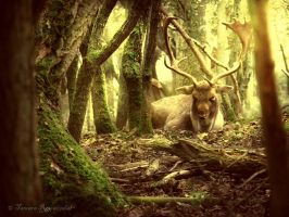 King of the Forest by tamaraR