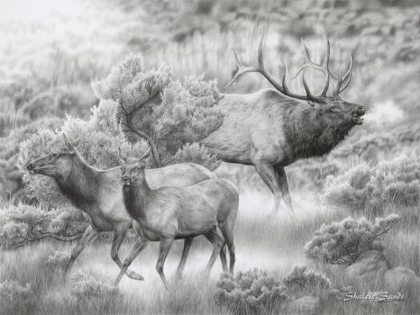 In Hot Pursuit - Drawing by ShaleseSands