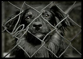 homeless dog by mikeb79