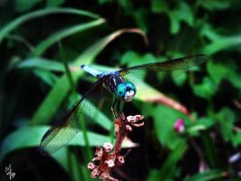 Resting Dragonfly by mon-mothma