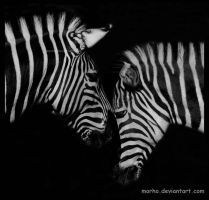 zebra: tenderness by morho