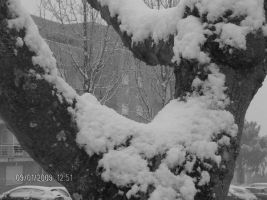 snow8 by ligthinthedarkness