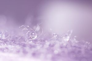 Lavender touch by kczajkowska
