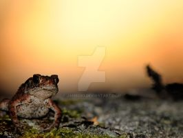 Frog in the sunset by jambo83