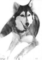 Dog (Drawing) [In memory of friend] by DesignerMF