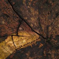 Abstract cutted tree III by yuushi01