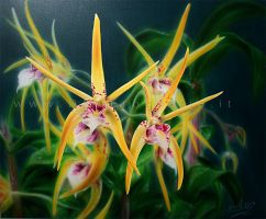 orchids by DMaerografie