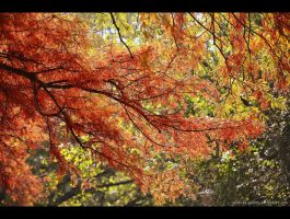 evanescent autumn by Iulian-dA-gallery