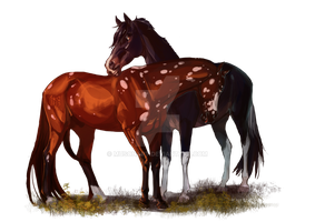  Comissions two horses  Sox and Levi by MUSONART