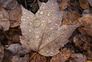 Autumn Droplets by Gwend-O-Ithilien