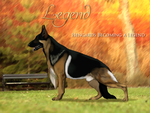 Isengards Becoming a Legend di Eurico by Gunsmoke-kennel