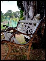 The Bench Under The Tree by drkines