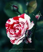 : painting the roses red . by maskqueraide
