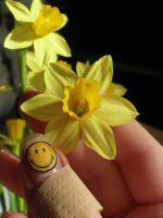 Smile Daffodil by blueBalance