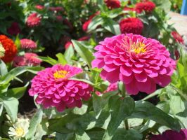 2 Pink flowers by aragornsparrow