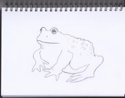 Toad by Amazoniai
