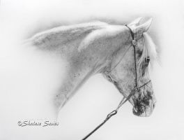 Elegant Gray - Drawing by Misted-Dream