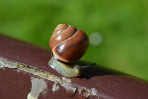 a snail on a bench by Kriscookies