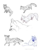 nikkiburr - Fox Sketches by nikkiburr