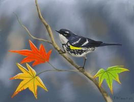 Fall Warbler by NetRaptor