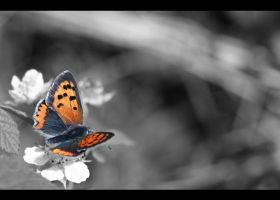 butterfly 3 by RodneyHomeMade