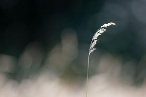 Lonely by ChristophGerlach