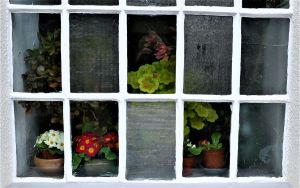 Panes of Plants by sags