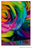 Happy Roses 12 by MarjoleinART-Photos